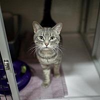 Adopt A Pet :: Shinnok - Raleigh, NC