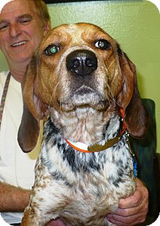 Beagle/Coonhound (Unknown Type) Mix Dog for adoption in Eastpoint, Florida - Lady