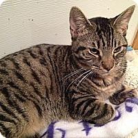 Adopt A Pet :: Delia - East Hanover, NJ