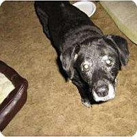Adopt A Pet :: Angel - Warren, NJ