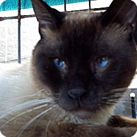 Adopt A Pet :: Gatsby - Lantana, FL