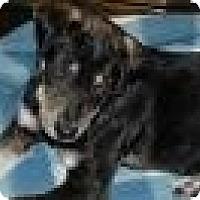 Adopt A Pet :: Jack - New Boston, NH