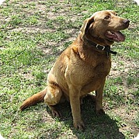 Adopt A Pet :: ROSCOE - Broomfield, CO