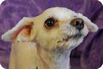 Terrier (Unknown Type, Small) Mix Dog for adoption in Philadelphia, Pennsylvania - Troy