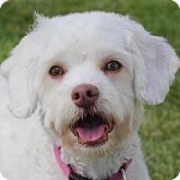 Adopt A Pet :: Mandi - La Costa, CA