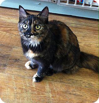 Domestic Mediumhair Cat for adoption in Port Hope, Ontario - Lucinda