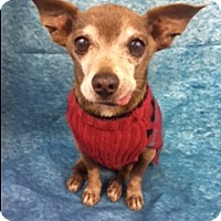 Adopt A Pet :: Jinx - Lake Elsinore, CA