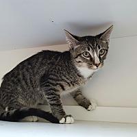 Adopt A Pet :: Harrison - Pasadena, CA