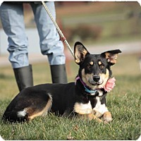 Adopt A Pet :: Marley - ADOPTED! - Zanesville, OH