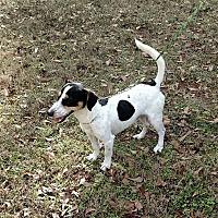 Adopt A Pet :: Jake - Valley, AL