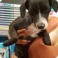 Adopt A Pet :: Wanda - Alhambra, CA