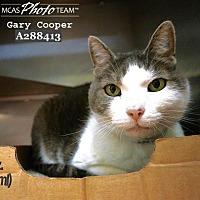 Adopt A Pet :: GARY COOPER - Conroe, TX