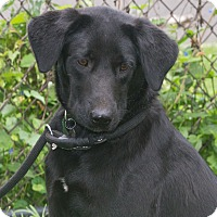 Adopt A Pet :: Matilda - Elmwood Park, NJ