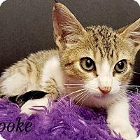 Adopt A Pet :: Brooke - Jackson, MS