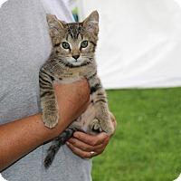 Adopt A Pet :: Carlie - Rochester, MN