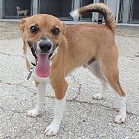 Adopt A Pet :: Toby - Seguin, TX