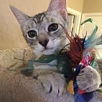 Adopt A Pet :: Bella - Tempe, AZ