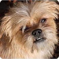 Adopt A Pet :: CORRINE -ADOPTION PENDING - Los Angeles, CA