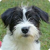 Adopt A Pet :: Nikki - Mocksville, NC