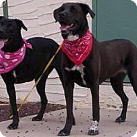 Adopt A Pet :: Gracie - Scottsdale, AZ