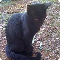 Adopt A Pet :: Journey - Monroe, GA
