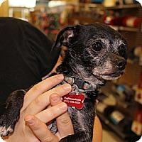 Adopt A Pet :: Smudge - Austin, TX