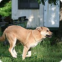 Adopt A Pet :: Janice - Poughkeepsie, NY