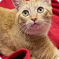 Adopt A Pet :: Ginger - Chicago, IL