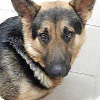 Adopt A Pet :: THANE - SAN ANTONIO, TX