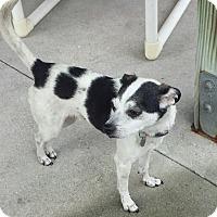 Adopt A Pet :: RAY - Terra Ceia, FL