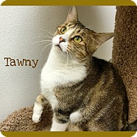 Adopt A Pet :: Tawny - Foothill Ranch, CA