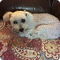 Adopt A Pet :: Rosie - Lehigh, FL