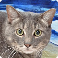 Adopt A Pet :: Jerry - Englewood, FL
