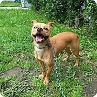 Adopt A Pet :: Buddy - St. Cloud, FL