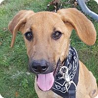 Adopt A Pet :: River - Glastonbury, CT