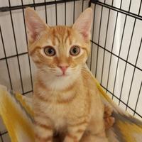 Adopt A Pet :: Austin - Suwanee, GA