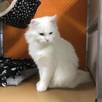 Adopt A Pet :: Sophie - Pequot Lakes, MN