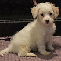 Adopt A Pet :: Astoria's Bronx - Palo Alto, CA