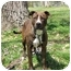 Photo 3 - Pit Bull Terrier/American Staffordshire Terrier Mix Dog for adoption in Chicago, Illinois - Brendy