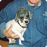Adopt A Pet :: Isabelle - Hamilton, ON