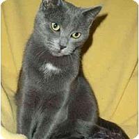 Adopt A Pet :: Tyler - Spencer, NY