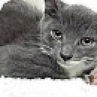 Adopt A Pet :: Joe Jonas - Richboro, PA