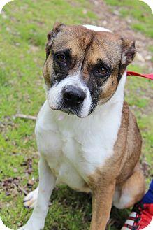Shepherd (Unknown Type) Mix Dog for adoption in Waldorf, Maryland - Talia