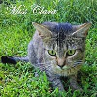 Adopt A Pet :: Miss Clara - Culpeper, VA