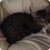 Adopt A Pet :: Mouse - Scottsdale, AZ
