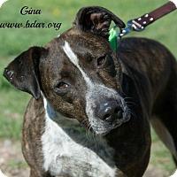 Adopt A Pet :: Gina - Cheyenne, WY