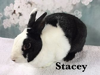 Dutch Mix for adoption in Auburn, California - Stacey