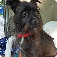 Adopt A Pet :: Dallas - Pottsville, PA