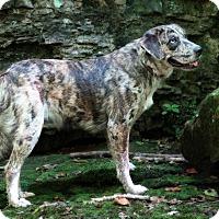 Adopt A Pet :: Jazzlynn - Union, CT