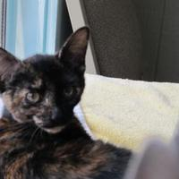 Adopt A Pet :: Meg - Thomasville, GA